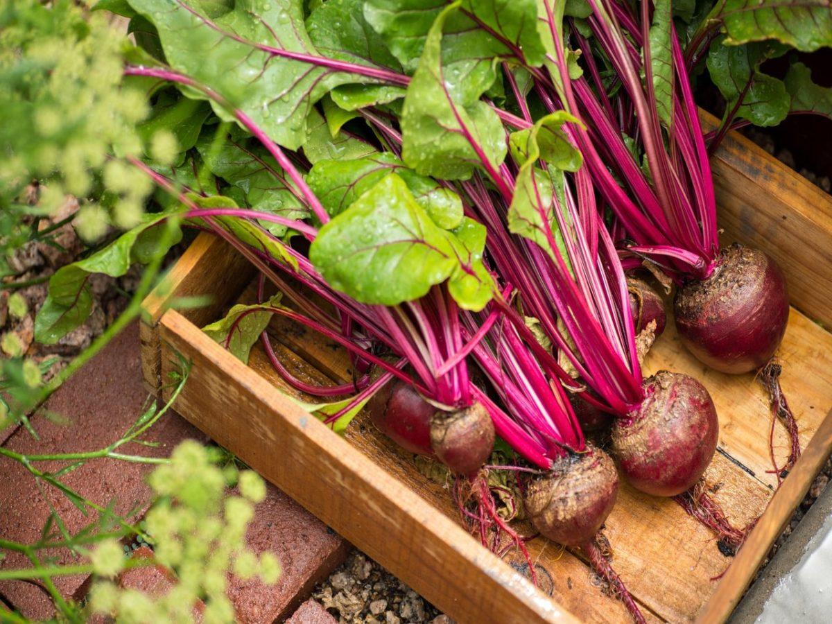 Овощи выращиваемые в домашних условиях